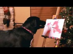 Arbor the Painting Dog Paints for the Victims of Domestic Violence