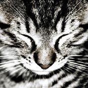 Sleeping Cat greetings card