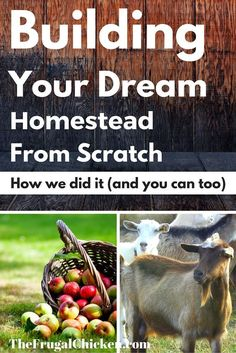 Start a Homestead From Scratch With No Money
