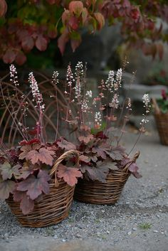 Sometimes bases of plants will just do for a shady area. Heuchera with its many different varieties looks great. Container Plants, Container Gardening, Shade Garden, Garden Plants, Beautiful Gardens, Beautiful Flowers, Pot Plante, Heuchera, Shade Plants