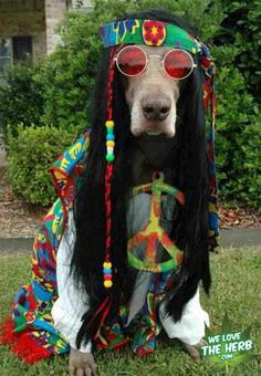 Hippie Dog  Cool look Maaaan love this under cove drugs shit, get to dress up too