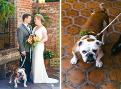 Corondolet House #weddingdog #bulldog #weddingdetails