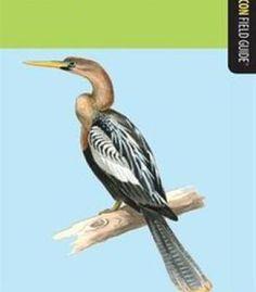 Birds Of Florida: A Falcon Field Guide PDF