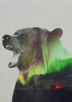 'Aurora Borealis Series: Bear' by Andreas Lie Graphic Art on Wrapped Canvas Canvas Artwork, Canvas Prints, Art Prints, Owl Canvas, Aurora Borealis, Northern Lights Tattoo, Double Exposure Photography, Art Photography, Poster Online