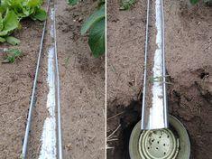 Íme egy egyszerű, vegyszermentes módszer lótetű ellen | Hobbikert Magazin Lawn And Garden