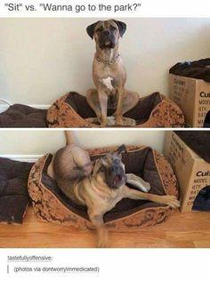 Funny Dog Memes, Funny Animal Memes, Cute Funny Animals, Funny Cute, Funny Dogs, Hilarious Sayings, Dog Humor, 9gag Funny, Memes Humor