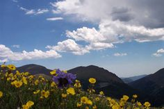 Beautiful Bailey Colorado. I miss it!