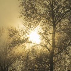 Sunrise winter fog
