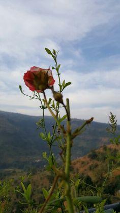 Rehaish#panchgani#december#flower