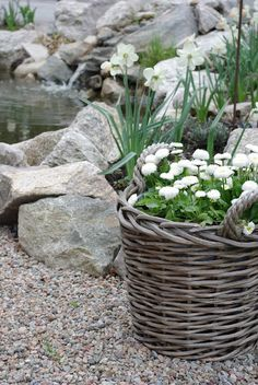 Love baskets for container gardens. Wicker will weather outside but with handles this planter is portable anyway & comes with built-in drainage. | The Micro Gardener