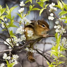Not a squirrel but so cute Hamsters, Rodents, Animals And Pets, Baby Animals, Funny Animals, Spring Animals, Chipmunks, Cute Squirrel, Squirrels