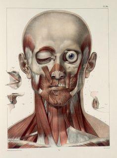 Muscles of the face and neck by Nicolas Henri Jacob from 'Traité complet de l'anatomie de l'homme' by Marc Bourgery, 1831. ~~ www.facebook.com/TheIrregularAnatomist ~~ www.twitter.com/Irr_Anatomist