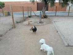 Juegos en el parque canino 06/16  Richie, Milo, Martín