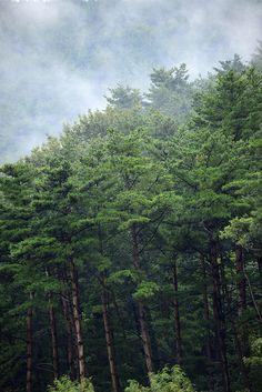 trees   nature + landscape photography