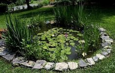 Water feature and ponds create habitats for frogs and insects and attract birds into your garden for wildlife
