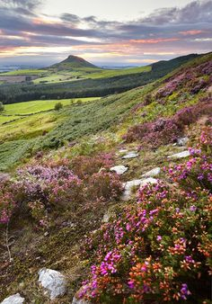 Sunset Heather at Roseberry Landscape Photos, Landscape Photography, Travel Photography, Beautiful World, Beautiful Places, Countryside Landscape, British Countryside, Adventure Is Out There, Nature Pictures
