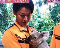 Naru Tabi - Australia <3 Koala kawaii ne ~~`