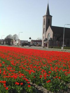 Day trips from Amsterdam    You can try the well-known tourist destinations in Belgium like Bruges and Ghent, or Antwerp and Brussels. Yet there are several options for quicker day trips within the Netherlands, whether your tastes lean towards modern urbanism or pastoral tulip fields.