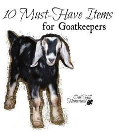 Time to start a homestead, right? Oak Hill Homestead: 10 Must-Have Items for Goatkeepers Keeping Goats, Raising Goats, Mini Goats, Baby Goats, Cabras Boer, Fainting Goat, Goat House, Goat Care, Nigerian Dwarf Goats