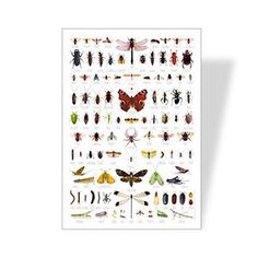 Backyard Bugs Poster | Learning Poster | Eco Friendly Poster | Bug Identification Chart