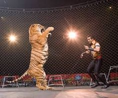 circus acts - Google Search