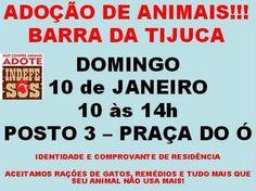 BONDE DA BARDOT: RJ: Adoção de cães e gatos na Barra da Tijuca, neste domingo (10/01)