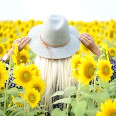 Sunflower fields/ McKenna Bleu