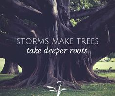 Storms make trees take deeper roots