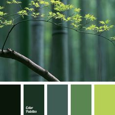 Is an expression of a monochrome palette with green shades from dark-swamp to light green. An interesting idea for a designer, giving the most profitable way to combine green in the interior, and clothes, and accessories. Monochrome green garden under the window of own house – isn't it a fairy tale?