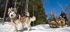 Raid en traîneau à chiens au Québec