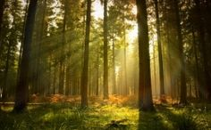 See Enchanted Forest Art Prints at FreeArt. Get Up to 10 Free Enchanted Forest Art Prints! Gallery-Quality Enchanted Forest Art Prints Ship Same Day. Forest Art, Pine Forest, Tree Wallpaper, Photo Wallpaper, Cubicle Wallpaper, Forest Wallpaper, Poster Photo, Poster Mural, Live Oak Trees