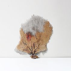 natural sea fan coral specimen by AMradio on Etsy, $39.00