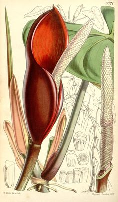 v.84 [ser.3:v.14] (1858) - Curtis's botanical magazine. - Biodiversity Heritage Library