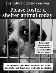 Have you considered fostering lately? It makes a difference. #DogMom #DogDad #Dogs #Dog #DogLover #RescueDog #ShelterDog