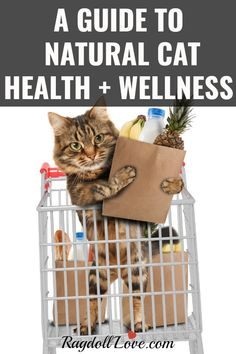 A Guide to Cat Health and Wellness. Your cat's health is probably THE most important thing to you as a cat owner. We are always looking for ways to heal our cats and make them healthy when they are unwell. We offer tips and advice to keeping your kitty in tip top condition, illness prevention and what to do when your feline friend is sick. #cat #cathealth #kitten #kittentips #cattips #catadvice Human Food For Cats, First Time Cat Owner, Cat Toilet Training, Cat Care Tips, Pet Life, Cat Health, Cat Food, Cat Breeds, Pets