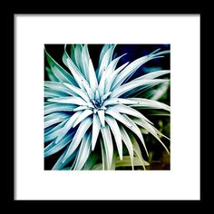 Blue Spiral Plant Abstract Framed Print By Christina Rollo