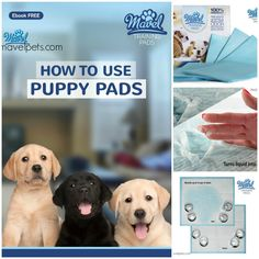 Housebreaking Training Pads for Puppies, Wee Wee Pad to Pee for Training Older Adult Dog or Cats, Dog Foot Pads or Pee Pad for Training your Puppy - 100% High Absorbency - 30 Day Money Back Guarantee.  #PetLovers #DogProducts #PetPads #TrainingPads #DogLovers