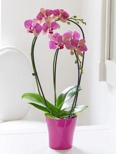 £38 interflora