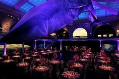 American Museum of Natural History New York. Lighting by Intelligent Lighting.