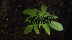 marcstonedagain:  smoke weed everyday