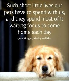 dog-quotes-6