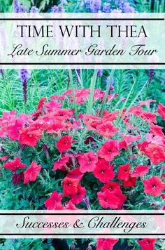 Time With Thea Late Summer Garden Tour – Challenges And Successes ~ Sharing garden bed, garden décor and outdoor planter tips, ideas and inspiration! / Time With Thea