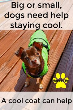 When it's hot out, your pup will thank you for one of these cool coats. They'll have more fun if they stay cool and comfy. Works on even the hottest days. They also help soak up water after a bath and smooth unruly fur too. Small Dog Coats, Small Dogs, Cool Coats, Hot Days, Little Dogs, How To Know, More Fun, Pup, Smooth