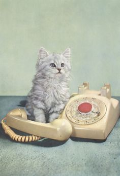 "* * ""Yer call wills beez ignored in de order it  wuz received on dis old-fashioned phone."""