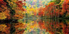 Γιατί τα φύλλα το φθινόπωρο αποκτούν διαφορετικά χρώματα   Perierga.gr