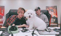 The secret member of exo: Vivi Baekhyun, Sehun Vivi, Korean Boys Ulzzang, Exo Memes, Kpop Exo, Cute Wallpaper Backgrounds, Chanbaek, Kpop Groups, Alyson Hannigan