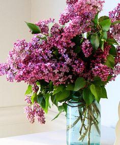 <3 Lilacs!
