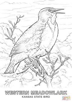 kansas-state-bird-coloring-page.jpg (1020×1440)
