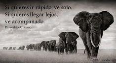 elefantes.png (827×454)