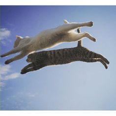 flying cats to the rescue!
